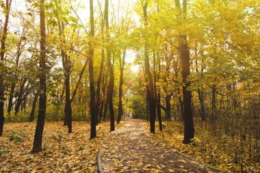 Pathway in autumn park on sunny day stock vector