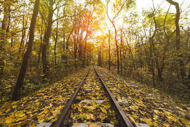 Railroad in autumn forest on sunny day stock vector