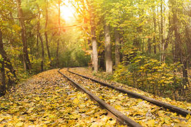 Railroad in beautiful autumn forest with sun shining behind trees stock vector