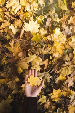 woman holding fallen leaf