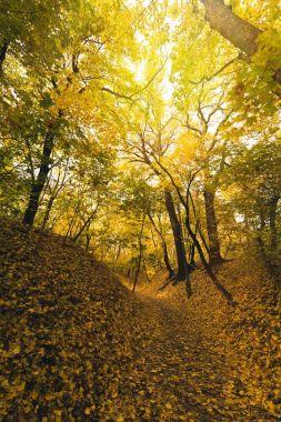 """Картина, постер, плакат, фотообои """"осенний лес, покрытый опавшими листьями постеры печать санкт-петербурга"""", артикул 171803654"""