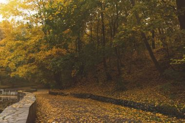 road in autumn park