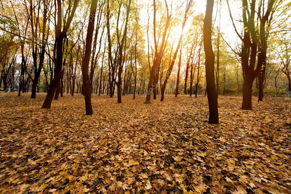 autumn park on evening