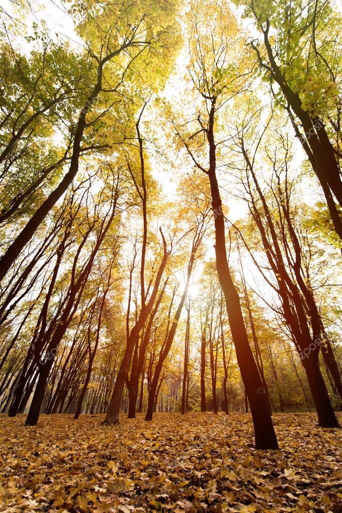 Фотообои autumn forest on sunny day