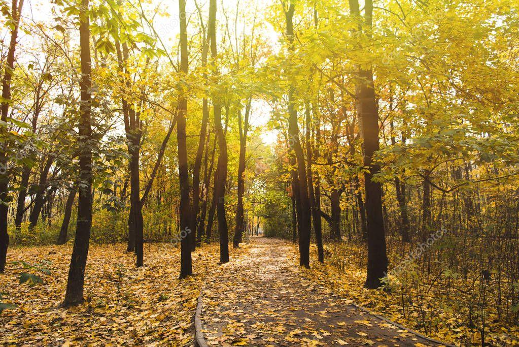 Фотообои тропа в осеннем парке