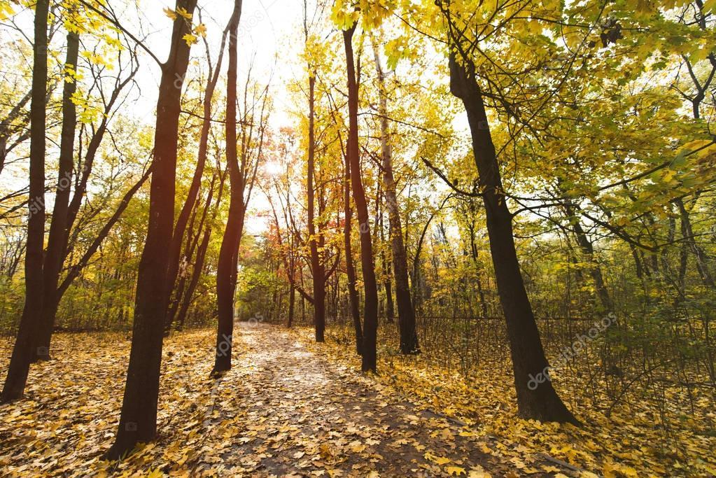 Фотообои pathway in autumn park