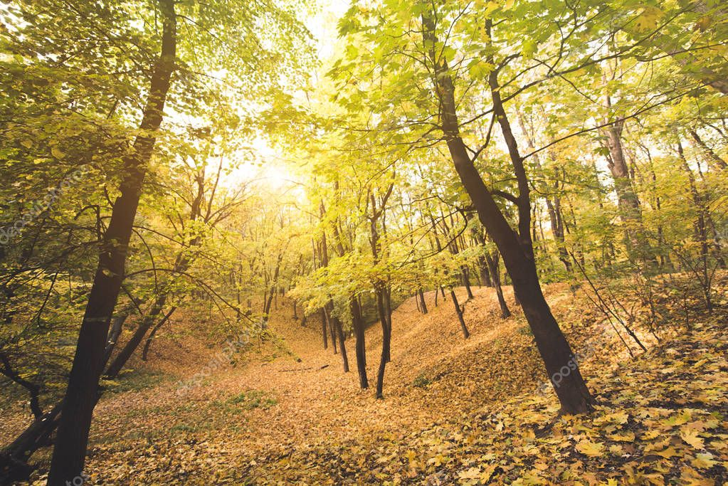 autumn forest on sunny day