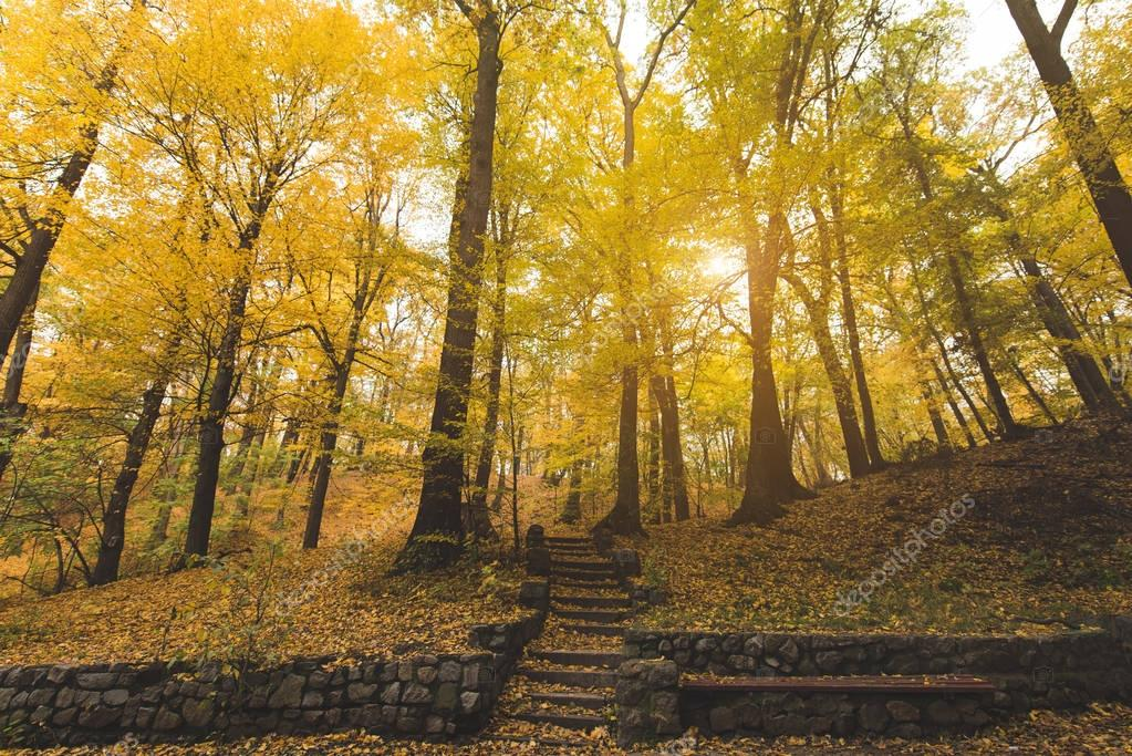 stairs at autumn park