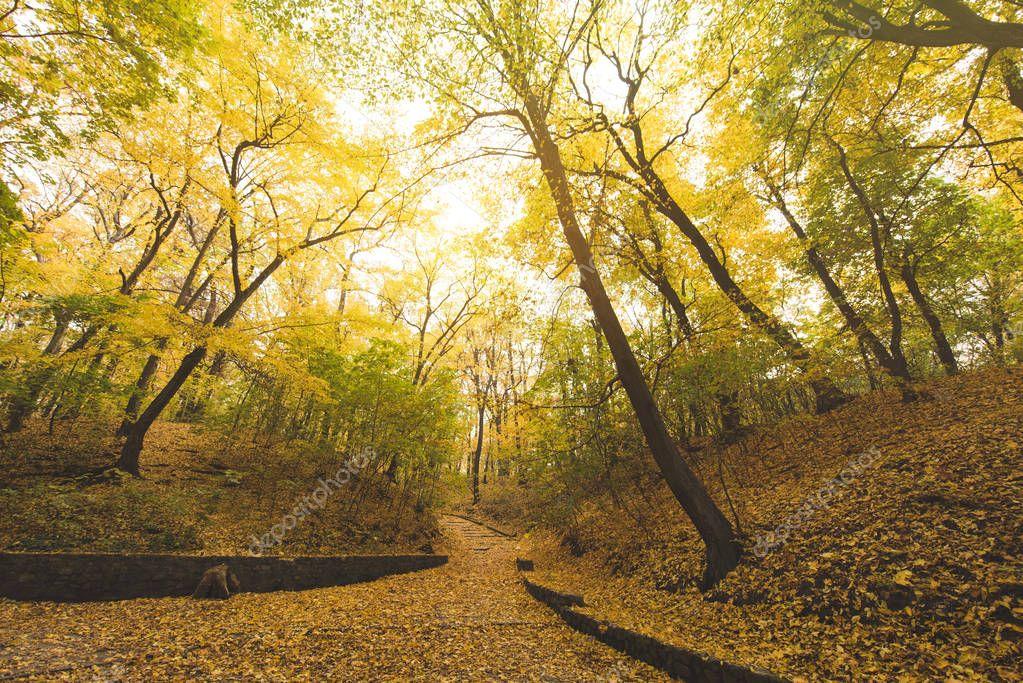 road in autumn park