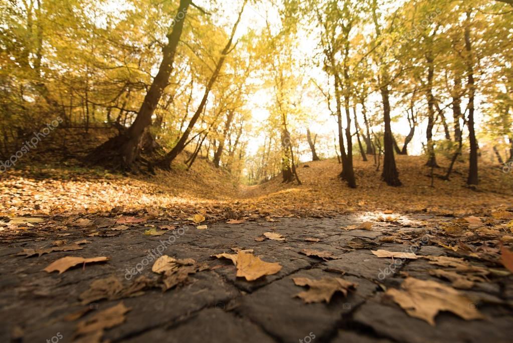 Фотообои красивый осенний парк