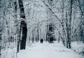Fotografie Paar spaziert durch den Winterwald