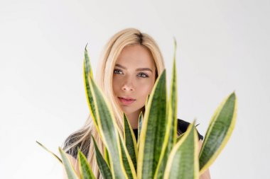 beautiful blonde girl looking at camera through leaves on green houseplant isolated on grey