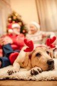 dog with christmas reindeer antlers