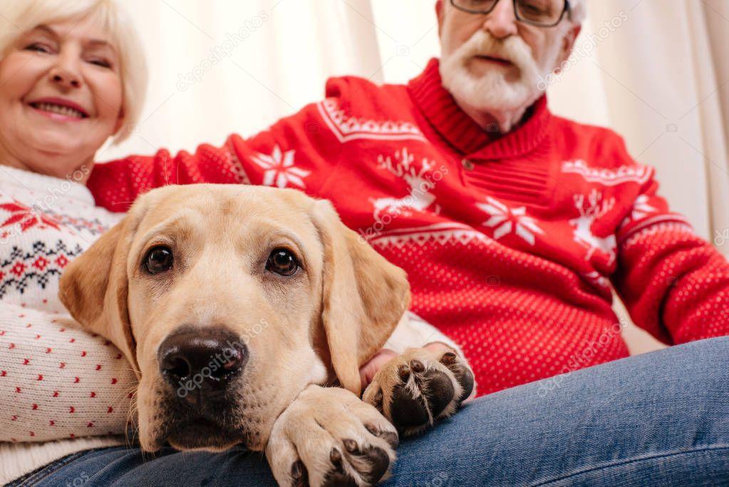 senior couple with labrador
