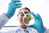 tudós, petri-csészében