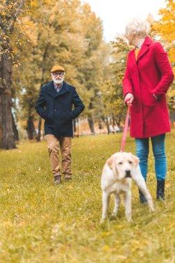 senior couple walking with dog