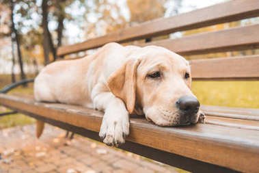 dog lying on bench in park