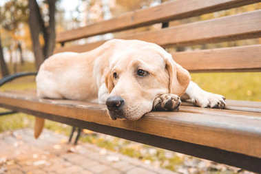 upset dog on bench