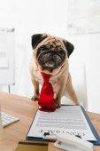 üzleti kutya-val szerződés
