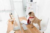 obchodní pes s počítačem