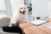 cane di affari con la cartella