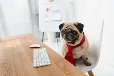 business dog in necktie