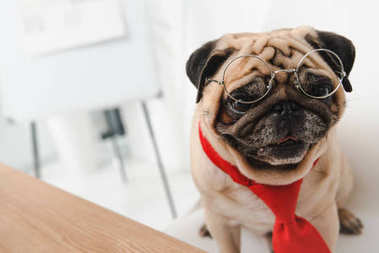Funny pug in necktie and eyeglasses looking at camera stock vector