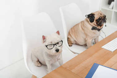 Two business dogs in eyeglasses and headset sitting together at workplace stock vector