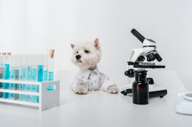 dog with test tubes and microscope