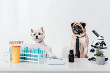 dogs scientists in laboratory