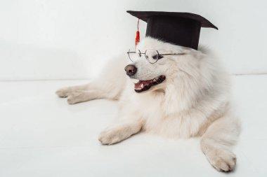 dog in graduation hat and eyeglasses