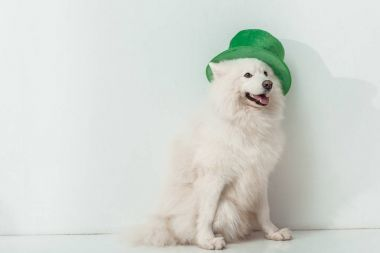 dog in green hat