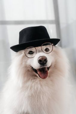 Adorable fluffy samoyed dog in hat and eyeglasses looking at camera stock vector