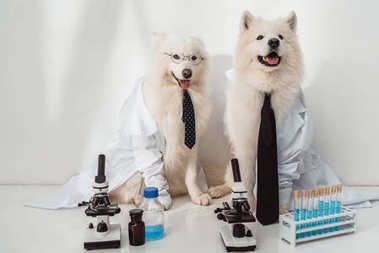 Dogs scientists lab coats working with microscopes and test tubes in laboratory stock vector