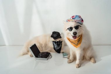 Two dogs in caps and bandanas sitting with money and black bag in metallic briefcase stock vector