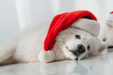 fluffy dog in santa hat