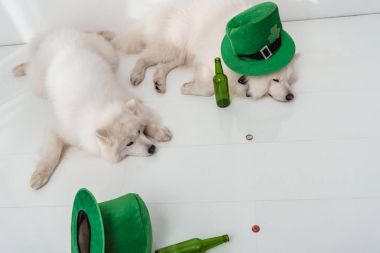 dogs with green hats and beer bottles