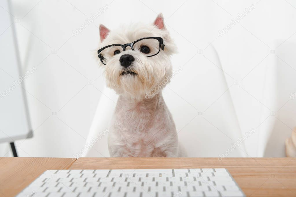 business dog in eyeglasses