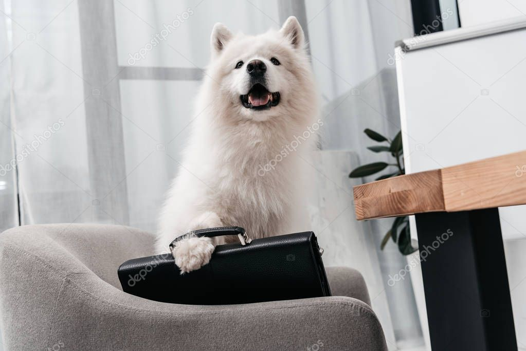 business dog with briefcase