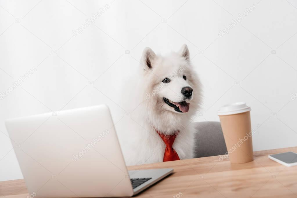 Business dog in red necktie sitting with laptop and paper cup at workplace