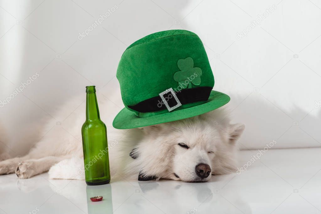 dog in green hat with beer bottle