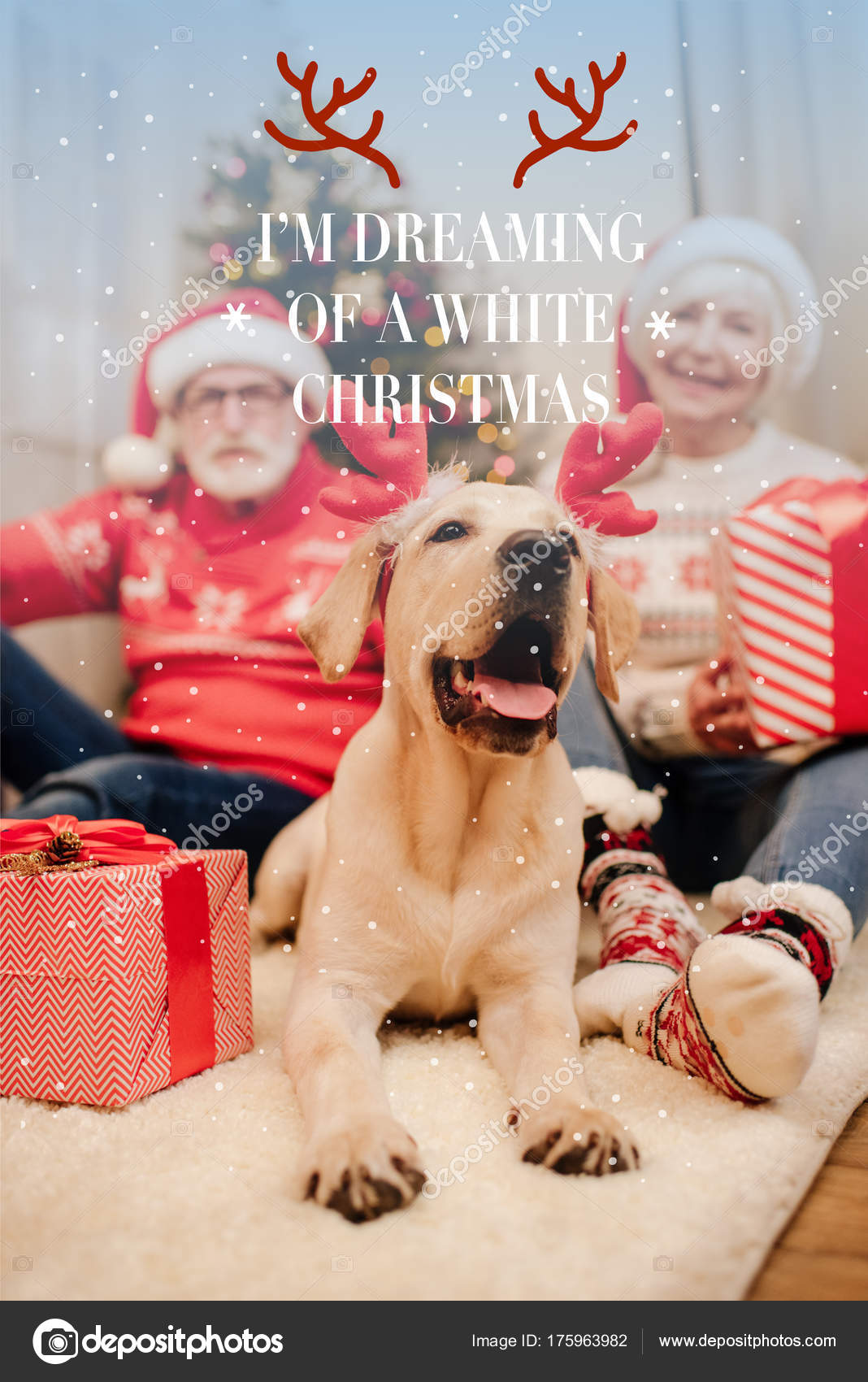 christmas greeting card with dog — Stock Photo © VitalikRadko #175963982