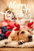 karácsonyi rénszarvas agancs kutya
