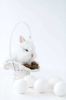 cute white rabbit on nest in basket and chicken eggs on white