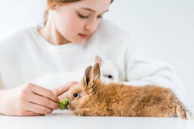 cropped shot of cute little girl feeding rabbits with broccoli on white