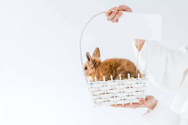 cropped shot of girl holding basket with cute furry rabbit and blank card isolated on white