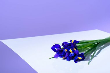 purple iris flowers, ultra violet trend