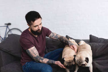 tattooed handsome man playing with pugs at home