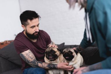 cropped image of tattooed couple palming pugs at home
