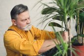 Fotografie serious senior man planting green plants at home